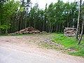 Woodpiles at Bardspark - geograph.org.uk - 177810.jpg