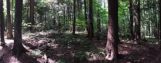 Laurel Hill Association - Panorama of woods on the Ice Glen Trail in Stockbridge, MA - trail maintained by the Laurel Hill Association