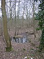 Woods near Sanham Green - geograph.org.uk - 345075.jpg
