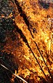 Wraxall 2013 MMB 88 Bonfire.jpg