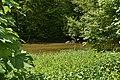 Wrisberholzen östlicher-Teich.jpg