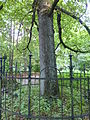 Wuppertal Zur Kaisereiche 2013 039.JPG