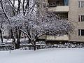 Zierkirsche im Winter 20141229 2.jpg