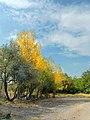 (((مناظر پاییزی باغات مراغه))) - panoramio (2).jpg