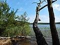 +20180611Müritz-Nationalpark.Feisneck See.-017.jpg