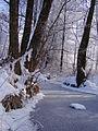 Łękawickie łęgi w zimowej odsłonie.jpg