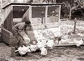 Šolska zadruga na osnovni šoli v Lokavcu v občini Lenart 1960.jpg