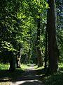Аллея Керн в парке.jpg
