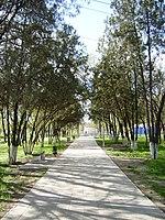 Аллея в парке им. Ленина.jpg
