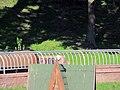 Гомель. Парк. У Лебяжьего озера. Фото 61.jpg