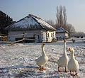 Зимний дворик - panoramio (2).jpg