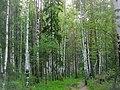 Исеть - panoramio (36).jpg