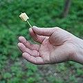 Кусочек сыра, наколотый на острую палочку.JPG