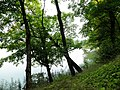 Озеро Baltmuižas ezers - panoramio.jpg