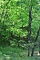 Парк Аскольдова могила у Києві. Фото 7.jpg