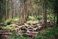 """Природный парк """"Иремель"""".jpg"""