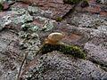 Скелі МОДРу 36 - равлик.jpg