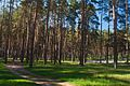Стежками Басівського парку.jpg
