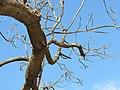 העץ כבר מוכן לחורף חוסמסה, חולון.JPG
