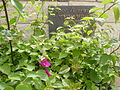 הפינה של יוסקה בבית פישר 7.10.2012.jpg