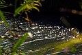 נחל תנינים היפה 06.jpg