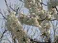 الموت روستای هریف - فصل بهار.JPG