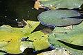 گیاهان در پاییز - باغ بوتانیکال تفلیس 19.jpg