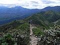 ニペソツ山と石狩岳を望む (Mt.Nipesotsu and Mt.Yuniishikari) - panoramio.jpg