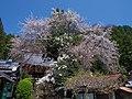 仏隆寺 宇陀市榛原赤埴 Butsuryūji 2013.4.13 - panoramio.jpg