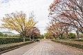 廣島市景 (48118260888).jpg