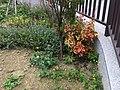 道旁花卉 Roadside Flowers - panoramio.jpg