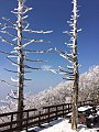 덕유산 (Deogyusan) snow trees.jpg
