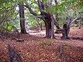 -2009-10-11 Trees, Lions roar, Felbrigg, Norfolk.JPG