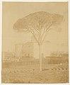 -Tree in Formal Garden Outside Palazzo- MET DP71311.jpg