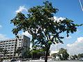 05957jfQuezon Memorial Authority Elliptical Road Quezon Cityfvf 03.JPG