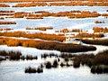 114 Reeds Lake Titicaca Peru 3264 (14996025010).jpg
