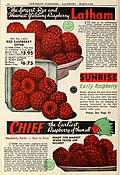 1946 catalog of fruits (1946) (16483177770).jpg