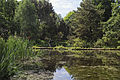 2010-06-01 Moorweiher im Bergarten von Hannover.jpg