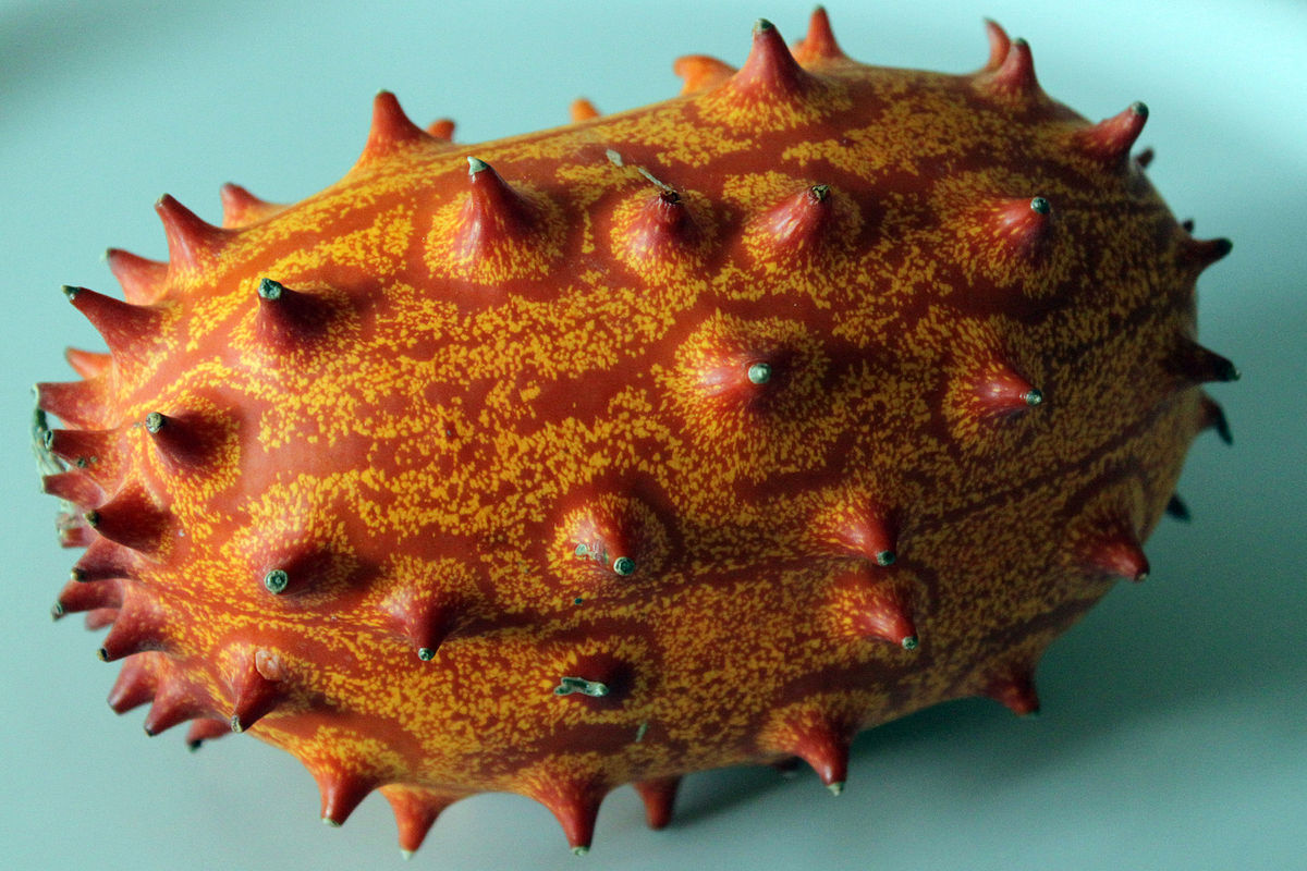 cucumis metuliferus wikipedia