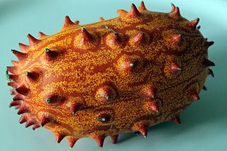 <i>Cucumis metuliferus</i> species of plant