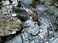 2015 Liechtensteinklamm Gesteine.JPG