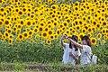 2017-07-15 Ono-himawarino-oka-park (小野市立ひまわりの丘公園) 6123☆彡.jpg