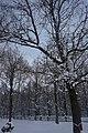 26-204-5014 чорний ліс.jpg