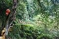 353, Taiwan, 苗栗縣南庄鄉獅山村 - panoramio (19).jpg