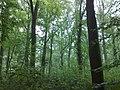 3981 Bunnik, Netherlands - panoramio - Alexandros Georgiou (8).jpg