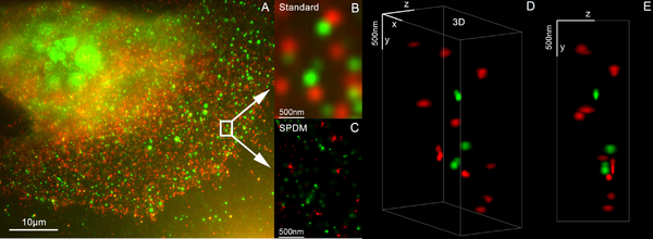 3D Dual Color Super Resolution Microscopy Cremer from 2010