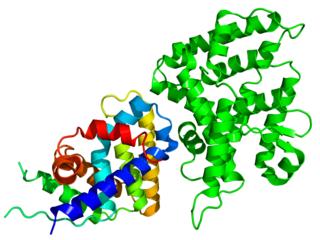 DAX1 protein-coding gene in the species Homo sapiens