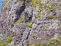 4017.Cap Frehel-Stechginsterpflanzen bewachsen jede noch so kleine Felsspalte des aus rotem Sandstein und schwarzen Schiefer bestehende Cap Frehel.JPG