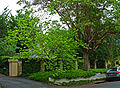 41 Arnold Street, Killara, New South Wales (2010-12-04) 02.jpg