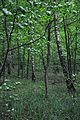 46-253-5002 Birch Grove Protected Tract RB.jpg